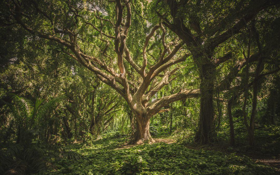 Tips voor het planten van bomen